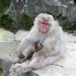 Affen beim Baden
