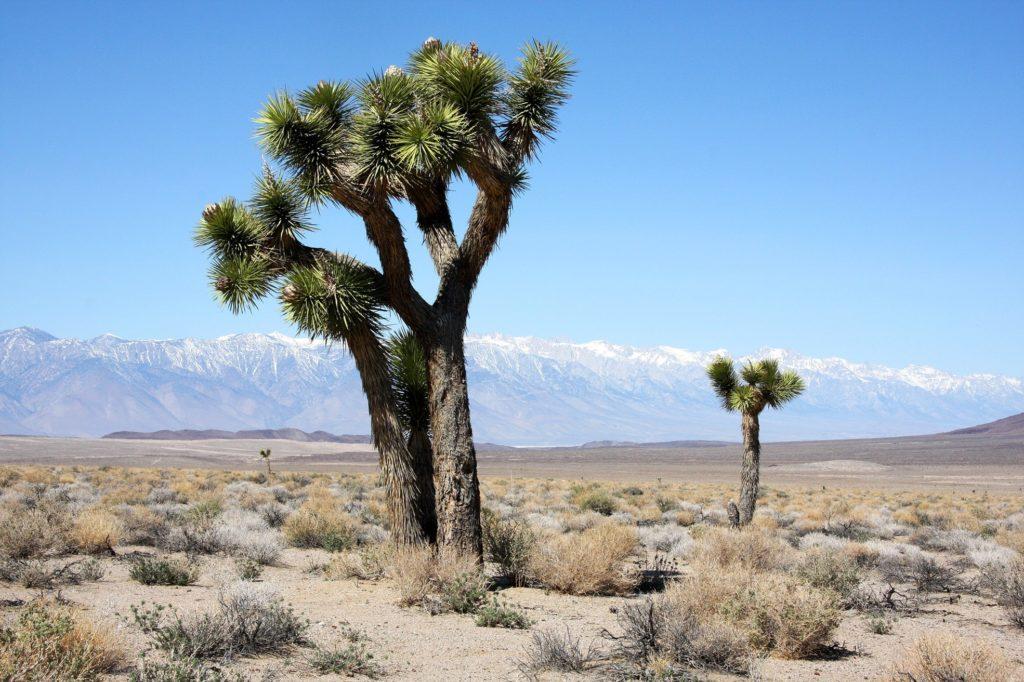Wüste in Vegas