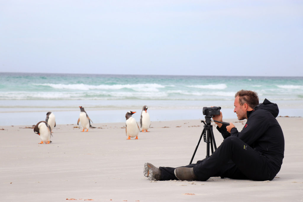 Pinguine auf Falkland