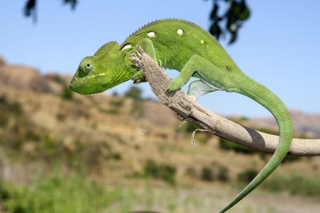 Tiere in Madagaskar